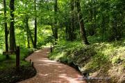 文学の森公園の小径