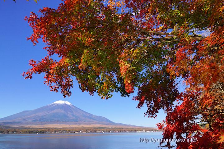 山中湖畔のもみじと富士山 ...
