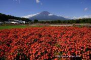 サンパチェンスと富士山
