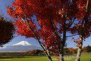 花の都公園の紅葉
