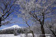 雪が降って木々が白く