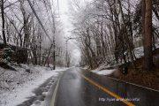 雪が降って白く
