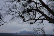 曇り空、大きな木の下から望む富士山