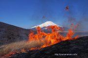 野焼きと富士山、火入れと富士山