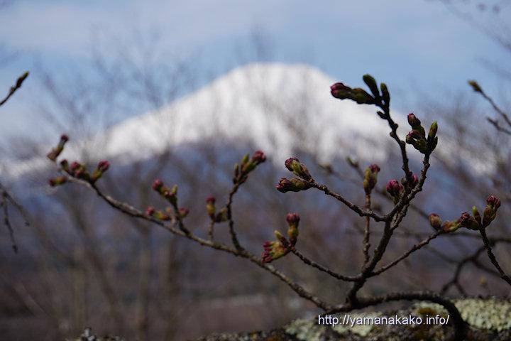 2017桜の開花定点観測VOL.01