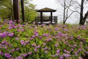 旭日丘湖畔緑地公園のツツジ