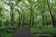 山中諏訪神社鎮守の森