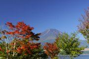 真っ赤に染まった木と夏富士