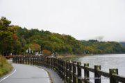 長池湖畔道路沿いの木々