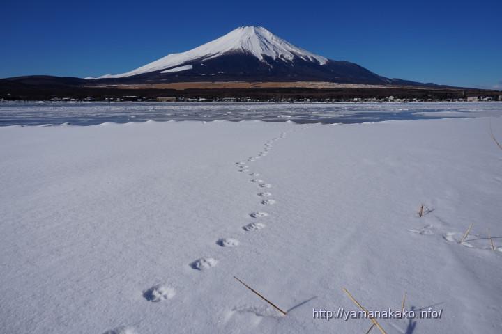 雪原に続く足跡