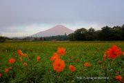 オレンジフレアと富士山