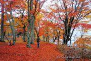 落ち葉で埋まった遊歩道
