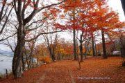 落ち葉に埋もれた遊歩道