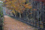 落ち葉のサイクリングロード
