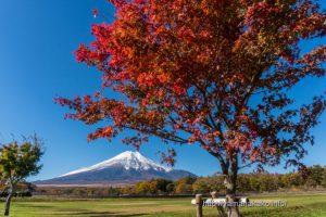 花の都公園の紅葉と富士山