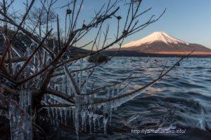 湖畔の氷柱と富士山