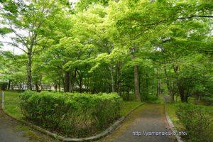 新緑の旭日丘湖畔緑地公園