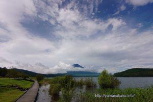 増水中の山中湖から望む富士山