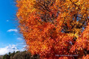 花の都公園入口の紅葉