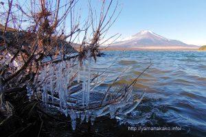 湖畔のつららと富士山