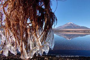 湖畔のつららと逆さ富士