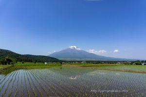 田んぼからの富士山