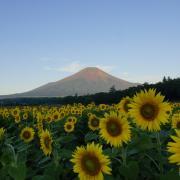 この時期の富士山の風景